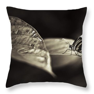 Butterfly Warm Tone Throw Pillow