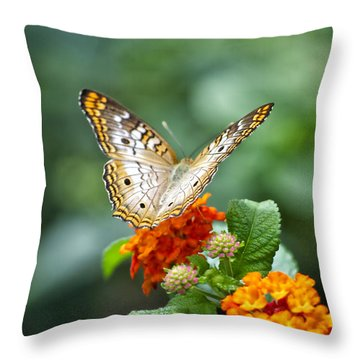Butterfly Wings Of Sun 2 Throw Pillow by Thomas Woolworth