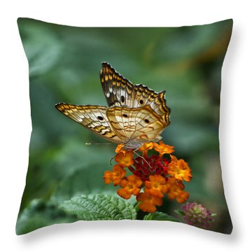 Throw Pillow featuring the photograph Butterfly Wings Of Sun Light by Thomas Woolworth