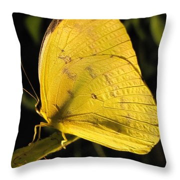 Butterscotch Throw Pillow