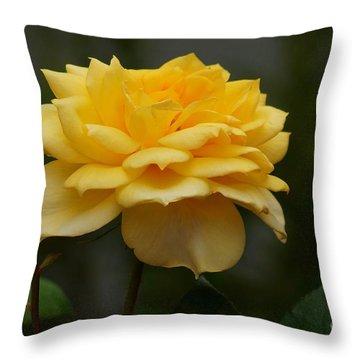 Throw Pillow featuring the photograph Butterscotch by John  Kolenberg
