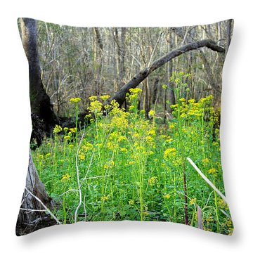 Butterweed Florida Wildflower Throw Pillow by Debra Forand