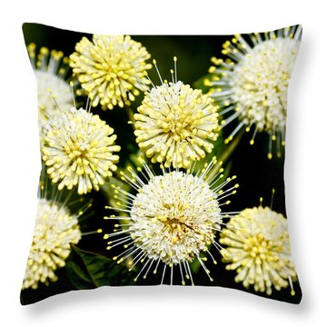 Buttonbush Throw Pillow