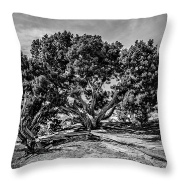 Bw Limber Pine Throw Pillow