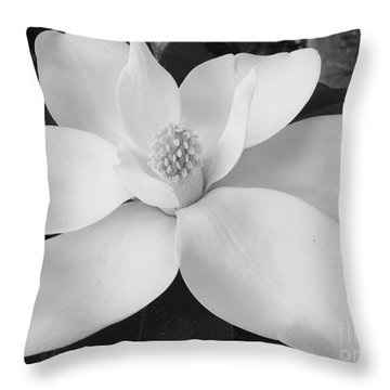 B W Magnolia Blossom Throw Pillow by D Hackett