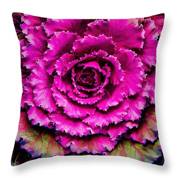 Cabbage Throw Pillow by Jon Burch Photography