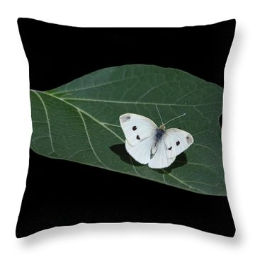 Cabbage White Butterfly Throw Pillow by Angie Vogel
