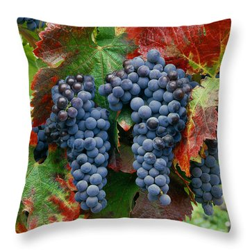 5b6374-cabernet Sauvignon Grapes At Harvest Throw Pillow