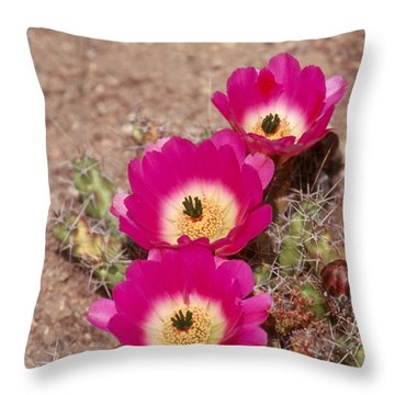 Cactus 1 Throw Pillow by Andy Shomock