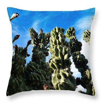 Throw Pillow featuring the photograph Cactus 1 by Mariusz Kula