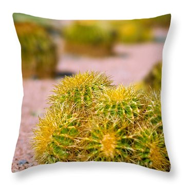 Cactus Throw Pillow by Amy Cicconi