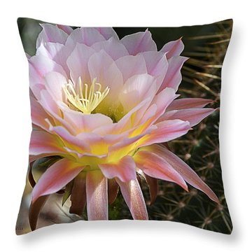 Cactus Bloom In Pink Throw Pillow