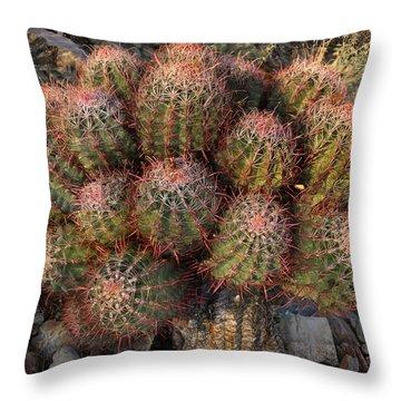 Cactus Burst Throw Pillow