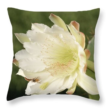 Throw Pillow featuring the photograph Cactus Flower And Bee by Bradford Martin