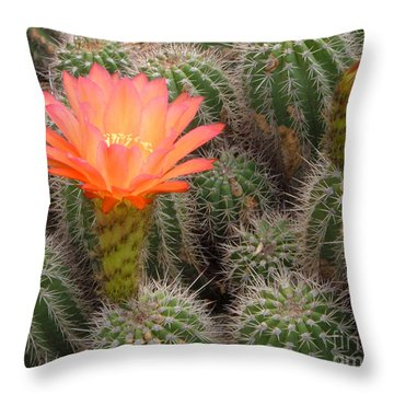 Cactus Flower Throw Pillow by Cheryl Del Toro