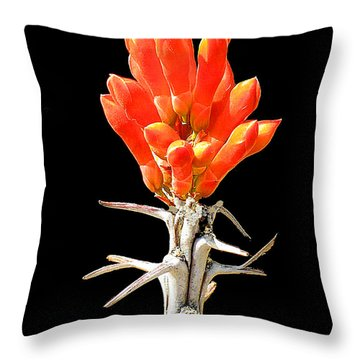 Throw Pillow featuring the photograph Cactus Flower  No. 9 by Merton Allen