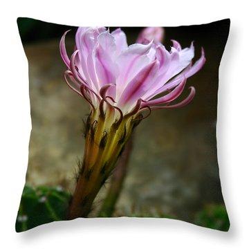 Cactus Flower Throw Pillow