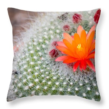 Cactus Flowers Throw Pillow by Cathy Donohoue