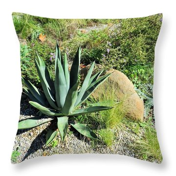 Throw Pillow featuring the photograph Cactus Garden by Jeanette Oberholtzer