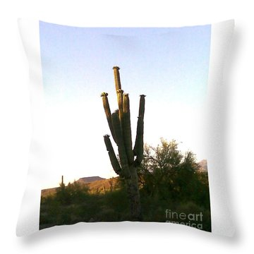 Throw Pillow featuring the photograph Cactus In Morning by Fred Wilson