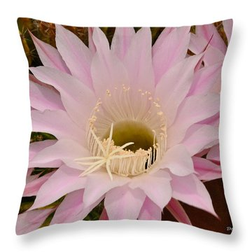 Throw Pillow featuring the photograph Cactus In The Backyard by Debby Pueschel