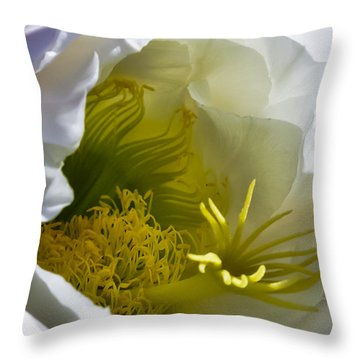 Cactus Interior Throw Pillow