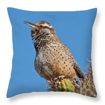 Cactus Wren Singing Throw Pillow by Jeff Goulden