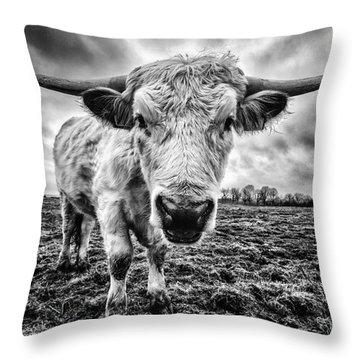 Cadzow White Cow Female Throw Pillow by John Farnan