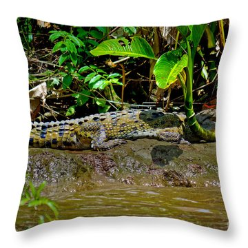 Caiman Cocodilus Throw Pillow by Gary Keesler