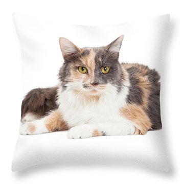 Calico Domestic Longhair Cat Laying Throw Pillow