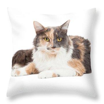 Calico Domestic Longhair Cat Laying Throw Pillow by Susan Schmitz