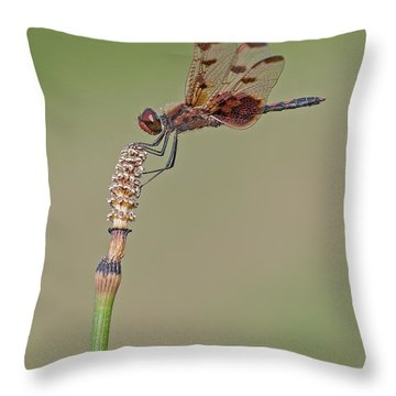 Calico Pennant On Horsetail Throw Pillow