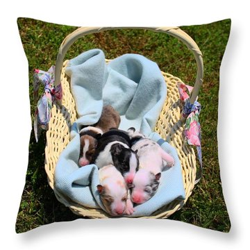 Calicos Pups At Two Days Throw Pillow by Kathryn Meyer