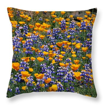 California Golden Poppies Eschscholzia Throw Pillow
