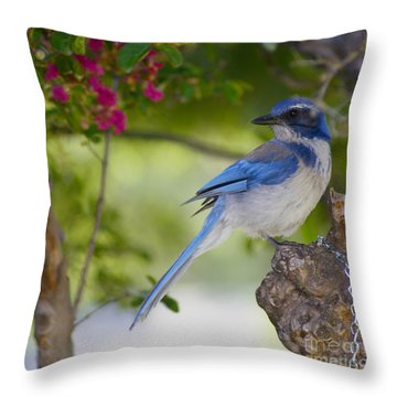 California  Scrub Jay Throw Pillow
