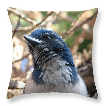 California Western Scrub Jay Throw Pillow by Patricia Barmatz