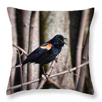 Call Of The Red Winged Blackbird Throw Pillow