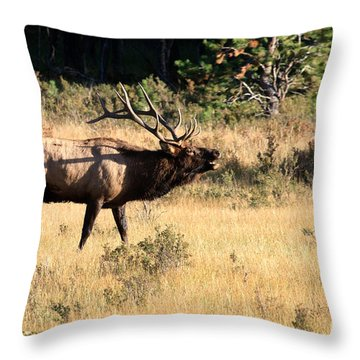 Call Of The Wild Elk Throw Pillow