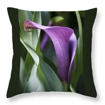 Throw Pillow featuring the photograph Calla Lily In Purple Ombre by Rona Black