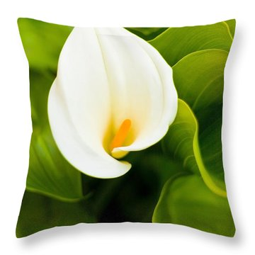 Calla Lily Plant Throw Pillow