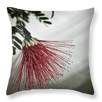 Calliandra Californica Throw Pillow