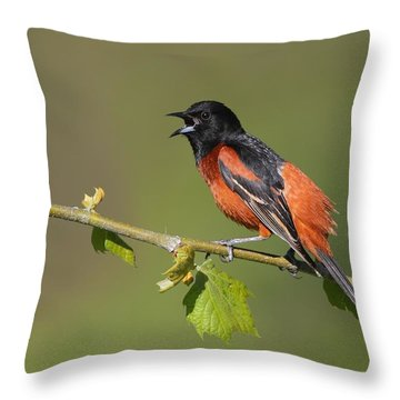 Calling Orchard Oriole Throw Pillow by Daniel Behm