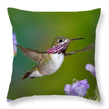 Calliope Hummingbird Throw Pillow by Anthony Mercieca