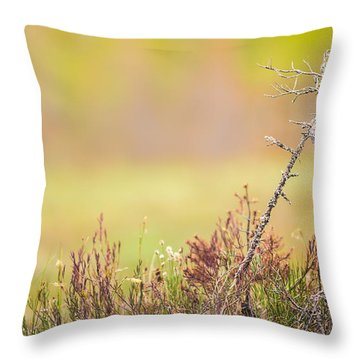 Calm Throw Pillow by Janne Mankinen
