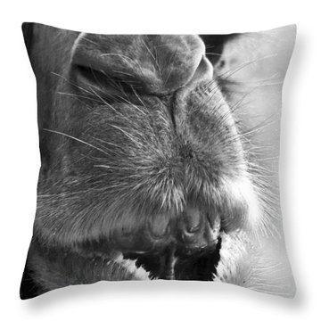 Camel Portrait Throw Pillow by Heiko Koehrer-Wagner