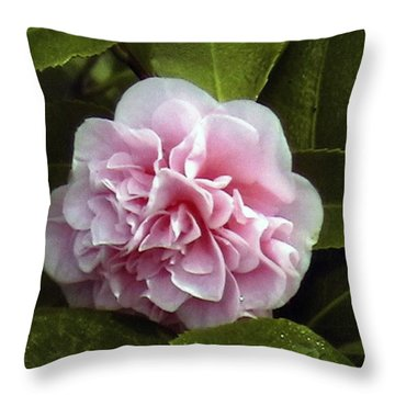 Camellia In Rain Throw Pillow by Patrick Morgan