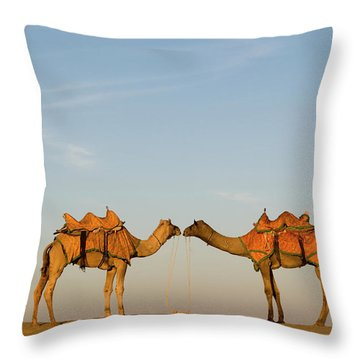 Camels Stand Face To Face In The Thar Throw Pillow