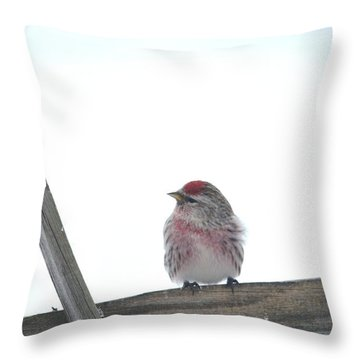 Throw Pillow featuring the photograph Camera Shy by Dacia Doroff