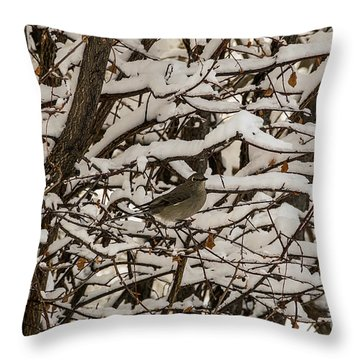 Camouflaged Thrush Throw Pillow by Sue Smith