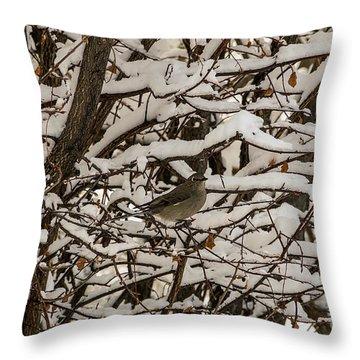 Camouflaged Thrush Throw Pillow